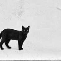"""Gato Mijas • <a style=""""font-size:0.8em;"""" href=""""http://www.flickr.com/photos/45427242@N07/51239910755/"""" target=""""_blank"""">View on Flickr</a>"""